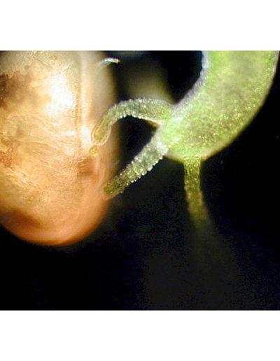 Mark Simmons | Microbus Microscope Educational Website